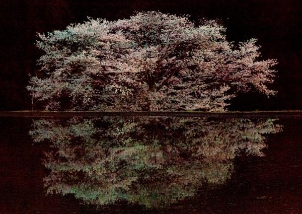 """אורי גרשט, """"נגד הזרם: מבודד"""", 2010. Via CRG Gallery, ניו יורק"""