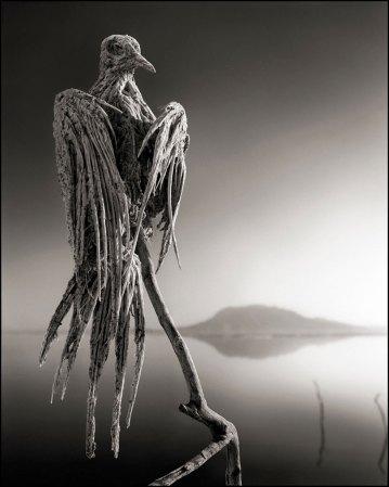 Nick Brandt, יונה שהורעלה והסתיידה באגם המוות נטרון שבטנזניה, 2012. Via DesignBoom