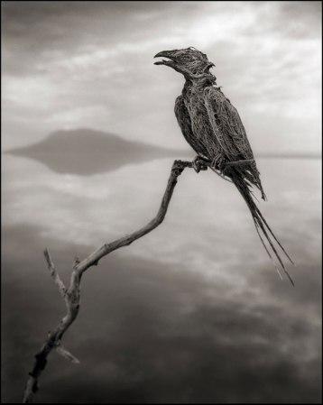 Nick Brandt, צפור-שיר שהורעלה והסתיידה באגם המוות נטרון שבטנזניה, 2012. Via DesignBoom