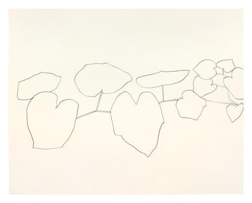 Ellsworth Kelly, גפן בר, 1960. גרפית על נייר.