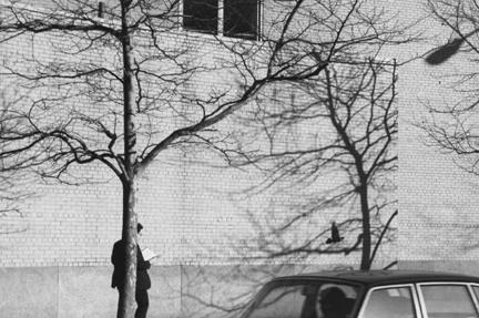André Kertész, ללא כותרת (יונה, גבר, קיר לבנים ועץ), 1977.  Museum of Contemporary Photography, Chicago