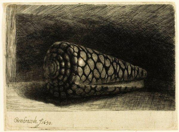 Rembrandt Harmenszoon van Rijn, הקונכיה, 1650. הדפס תצריב על נייר בגוון שנהב,  The Art Institute of Chicago